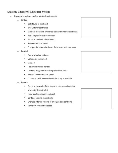 images  anatomy  physiology worksheet packets
