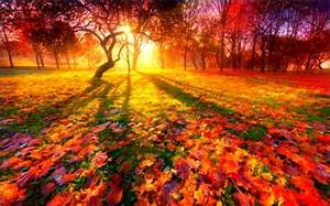 Sunrise in autumn - Other & Nature Background Wallpapers ...