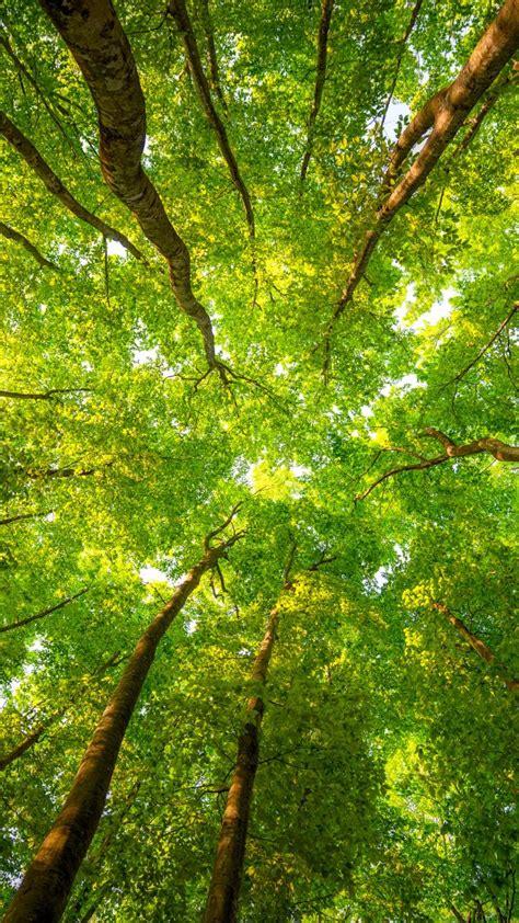 Wallpaper Trees, 5k, 4k Wallpaper, 8k, Sunlight, Leaves, Forest, Branches, Nature #5348