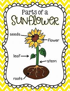 Parts Of A Sunflower Labels
