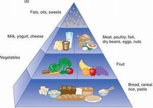 14 Digestive System