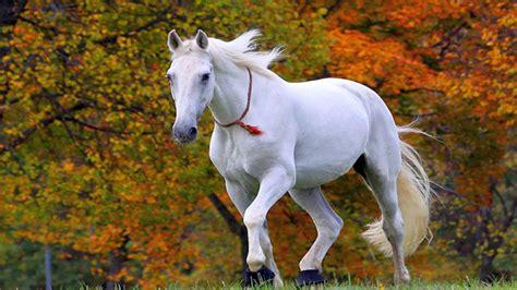 7 White Horse Wallpaper 7 Running Horses Wallpaper 020