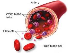 Low Red Blood Cell Count Causes Red Count
