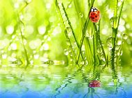 Ladybug with Water Drops Nature Wallpaper
