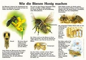Warum Machen Bienen Honig : wie die bienen honig machen 50x70 70x100 cm insekten ameisen und spinnen lehrtafeln ~ Whattoseeinmadrid.com Haus und Dekorationen