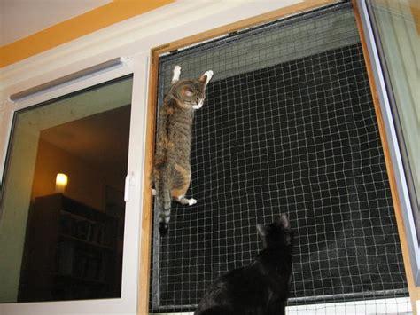 fenster katzensicher machen fenster katzensicher machen katzennetz f r balkon in bonn fenster katzensicher machen balkont