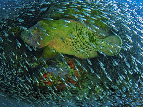underwater  ocean big fish   company
