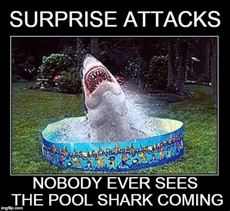 Shark Attack Meme - we re gonna need a bigger pool surprise attacks nobody ever sees the pool shark coming