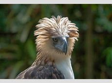 Philippine Eagle Lecture The Community Library