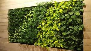 Mur Vegetal Exterieur : comment faire un mur vegetal ~ Melissatoandfro.com Idées de Décoration