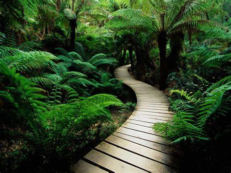 lush vegetation path wallpapers lush vegetation path