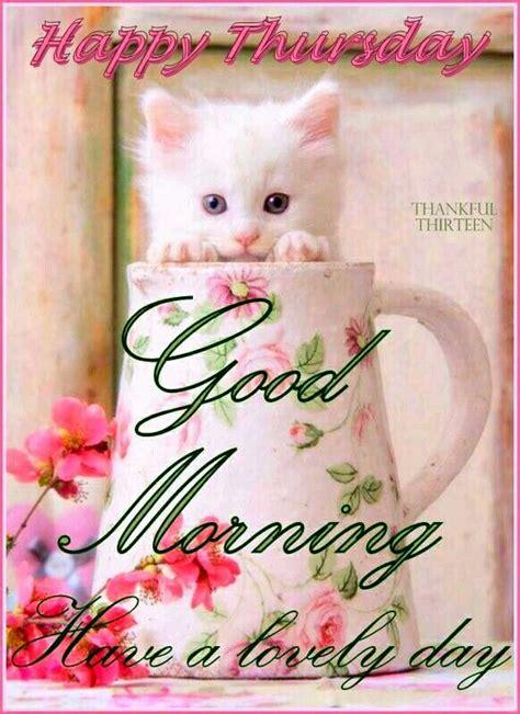 good morning thursday kitten good morning happy