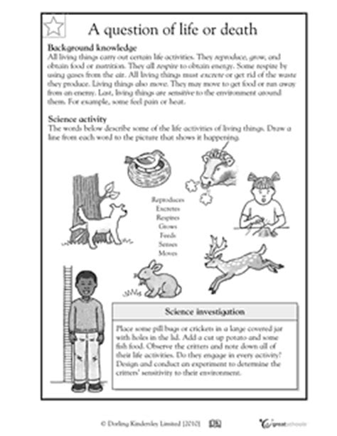 images  classifying worksheet middle school