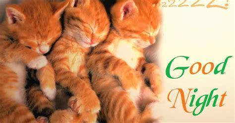 funny animals good night cards wallpapers  festival chaska