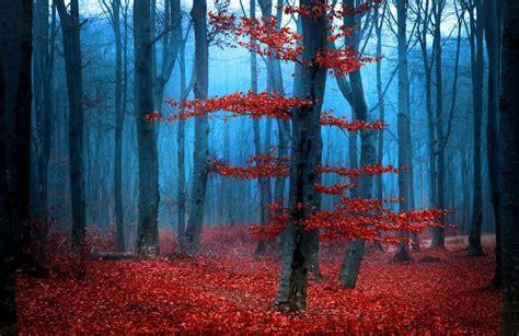 fototapeta mroczny las jesienia fototapety lasy