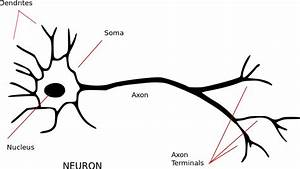 File Neuron - Annotated Svg