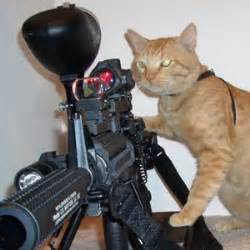 cat gun pictures cats with guns