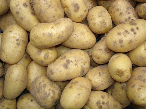 quand et comment planter les pommes de terre