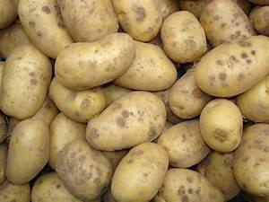 Période Pour Planter Les Pommes De Terre : quand et comment planter les pommes de terre ~ Melissatoandfro.com Idées de Décoration