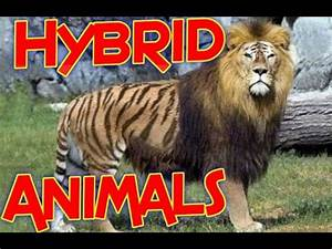 The Top 10 Hybrid Animals - Real Hybrid Animals - Hybrid ...