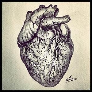 #human #heart #veins #drawing #sketch #sketching #art # ...