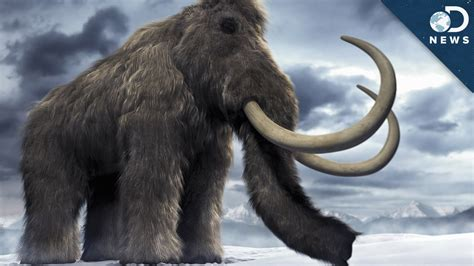 woolly mammoth brain  time  clone youtube