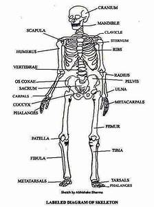 Excretory System Coloring Pages