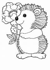 Coloring Pages Hedgehog Hedgehogs Animals Adult Animal Coloringpages1001 sketch template