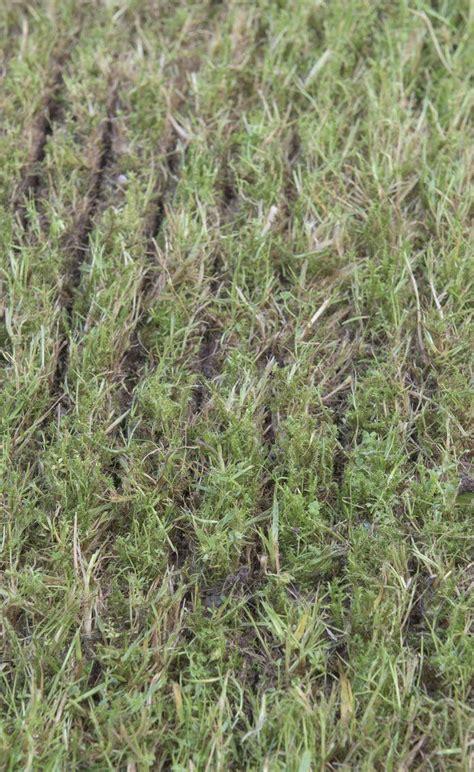 übergang Terrasse Rasen by So Erneuern Sie Ihren Rasen Ohne Umgraben Garten Rasen