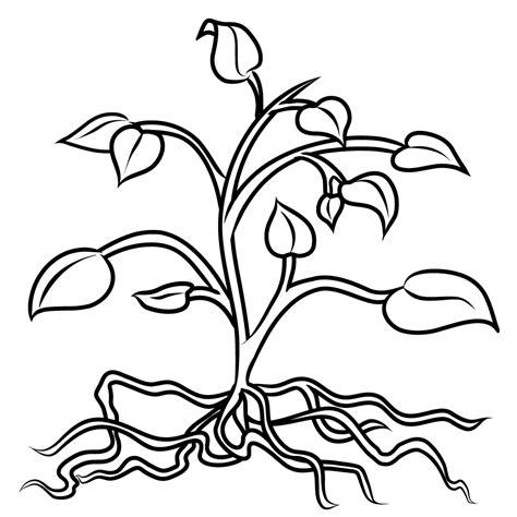 plant coloring pages udl illustration center