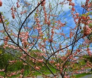 Schöne Bäume Für Garten : baum f r den garten eine auswahl der sch nsten sorten ~ Eleganceandgraceweddings.com Haus und Dekorationen