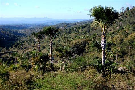 amanatun utara timor tengah selatan wikipedia bahasa