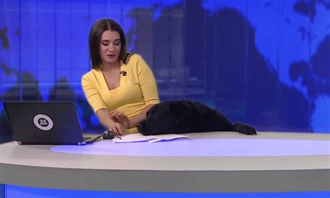 emission cuisine tv russie un chien interrompt un journal d 39 information en direct