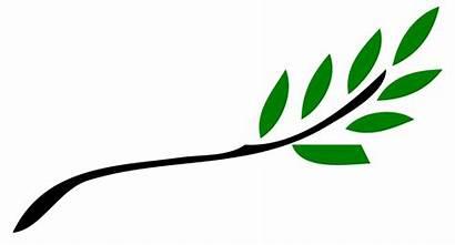 Branch Olive Svg Wikimedia Commons Wikipedia Pixels
