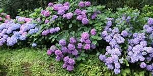 Plante Ombre Exterieur : plante ombre pivoine etc ~ Carolinahurricanesstore.com Idées de Décoration
