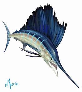 Tom D'Auria: Sailfish