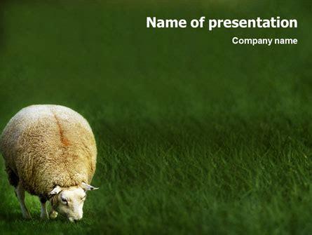 sheep   template  google