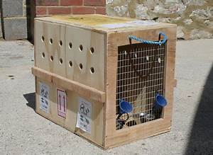 Crates air pets america air pets america for Dog shipping crates