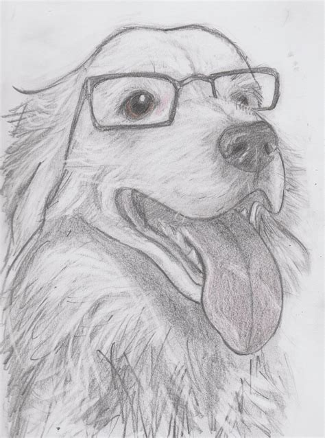 Leo The Border Collie Wearing His Mums Reading Glasses