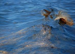 Indonesia Boat Sinking by Exxon Valdez Oil Spill Noaa S Response And Restoration Blog