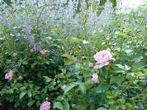 Böschung Bepflanzen Fotos : brauche rat wie w rdet ihr diese kleine b schung bepflanzen mein sch ner garten forum ~ Orissabook.com Haus und Dekorationen