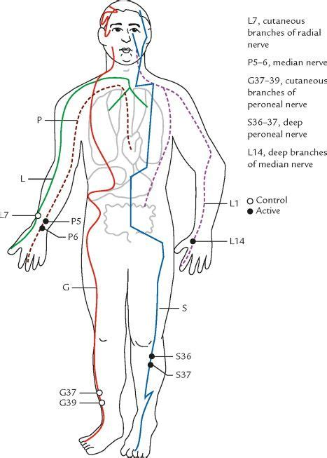 acupuncture meridian chart meridian charts acupuncture chinese medicine acupressure