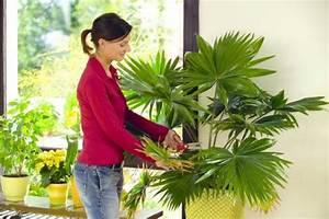 Welche Erde Für Palmen : gr npflanzen f rs zimmer mein sch ner garten ~ Watch28wear.com Haus und Dekorationen