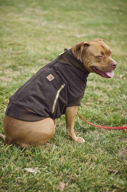 canine carhartt coat   pal coats english