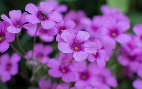 pictures of beautiful flowers wallpapers and 183 ①