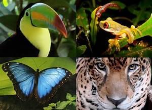 The amazon rainforest plants, amazon rainforest - Funny ...