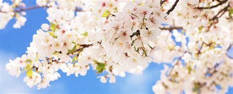 Fit Durch Den Frühling  Maharishi Ayurveda