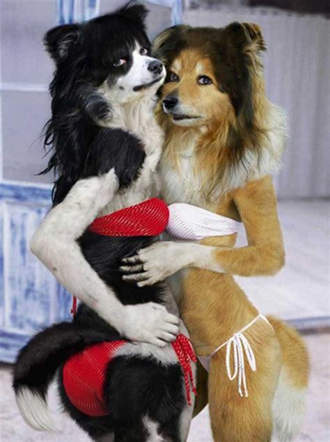 beautiful doggies  sovietunion  deviantart