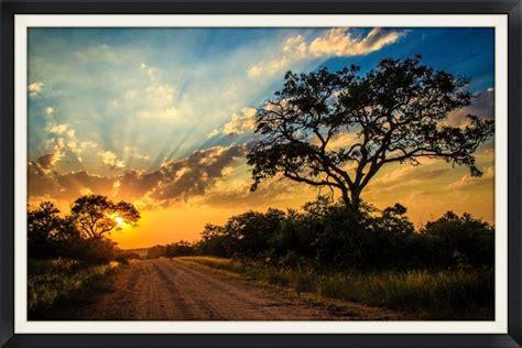 artist statement renata ewald wildlife photographer
