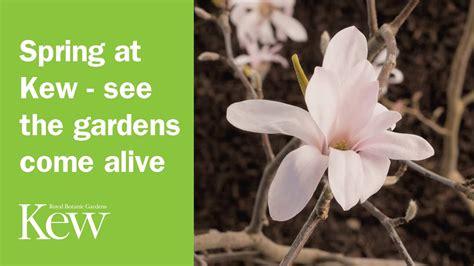 spring gardens kew alive come